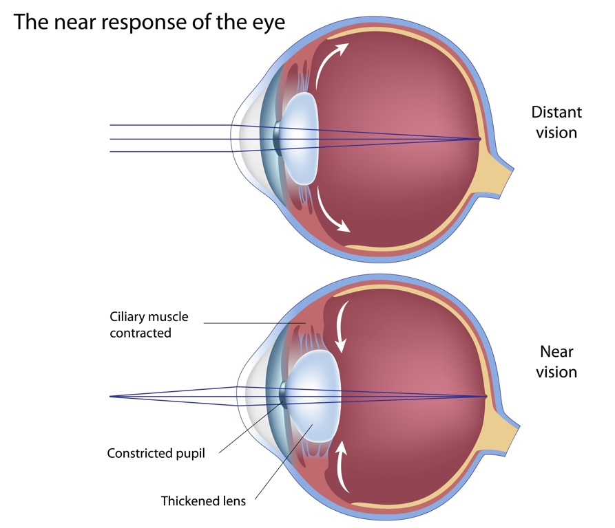 Diagram explaining the eye accommodation system